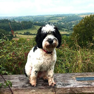 <strong>The Bear of Rodborough, Gloustershire:</strong> Wake up to the National Trust land on Rodborough Common to make this petaway the ultimate dog-walking haven! This super dog-friendly includes breakfast for you and a delicious sausage for your pup.