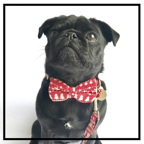 The Finland Bow Tie and Lead Set 5