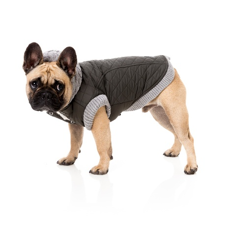 Jersey Dog Hoodie