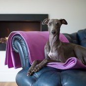 The Lounging Hound - Pure Wool Throw - Aurora Pink