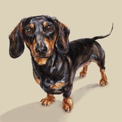 Paint My Dog  - Dachshund Art Print