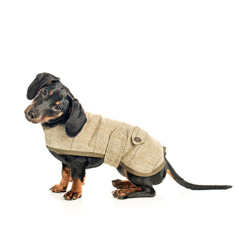 Tweed Dachshund Coat 3