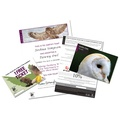Adopt An Owl Gift Box 3