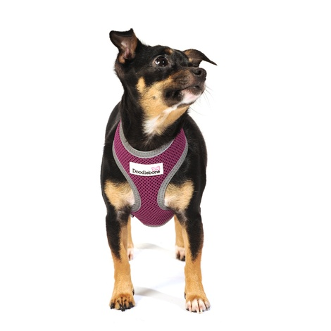 Reflective Airmesh Dog Harness – Purple 5