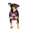 Reflective Airmesh Dog Harness – Purple 7