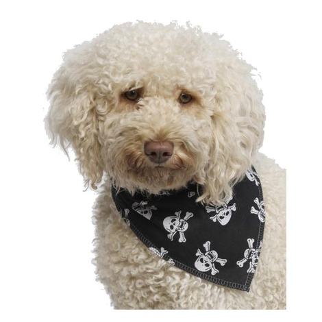 Dog Bandana - Black Skulls