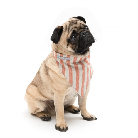 Orange Stripe Brushed Cotton Dog Bandana 3