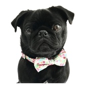 Percy & Co - Collar and Bow Tie - Clifton