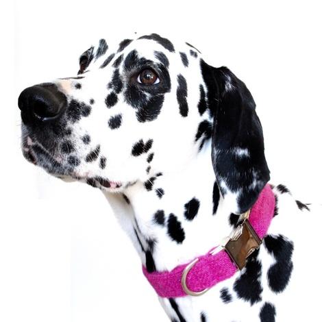 Nessie Harris Tweed Dog Collar 2