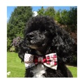 "Patchwork Dog Bow Collar 1"" Width 2"