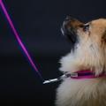 Pink Dog Lead 3