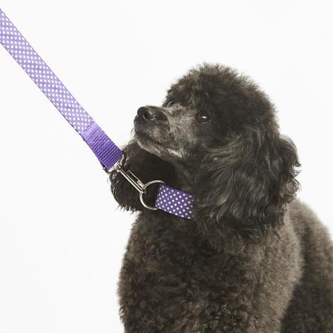 """Purple Polka Dot Lead  1"""" Width 3"""