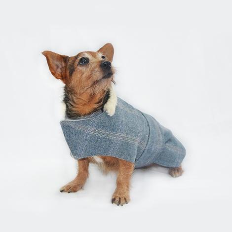 Polo Tweed Dog Coat 2