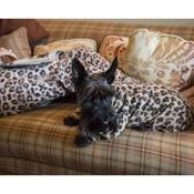 Pawberry - Dog Onesie - Leopard Print