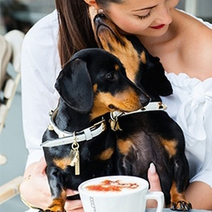 <strong>Dine With Your Dog</strong>: Gourmet Getaways for an indulgent break with your trusty hound.