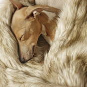 Charley Chau - Faux-Fur & Fleece Dog Blanket - Oatmeal