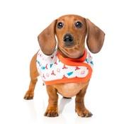 FuzzYard - Fox Wrap Dog Coat