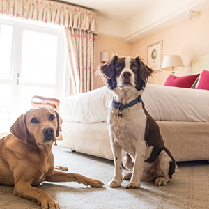 <strong>Thurlestone Hotel, Devon: </strong> Idyllic coastal retreat for you and your canine