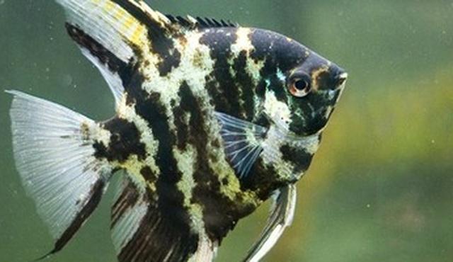 Beacon Pet Aquarium 3