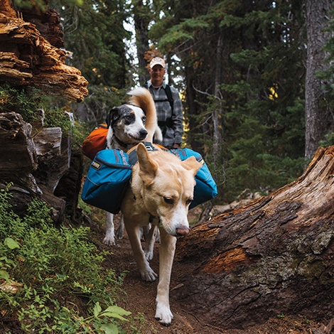 Ruffwear Approach Dog Pack - Pacific Blue 3