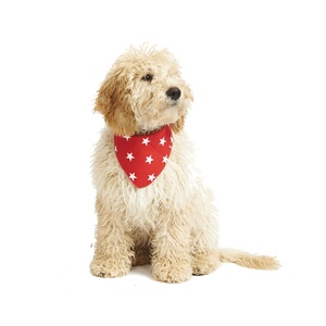 Red Star Dog Bandana