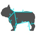 Candy Dog Harness - Blue 3