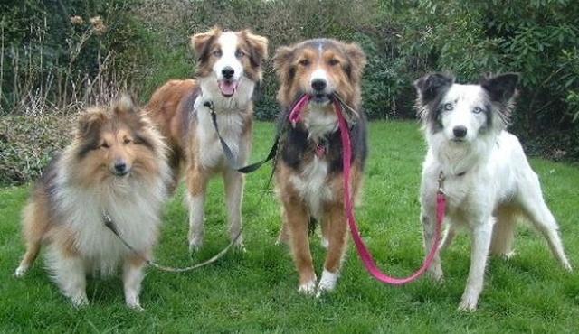 Doggies' Crib 3