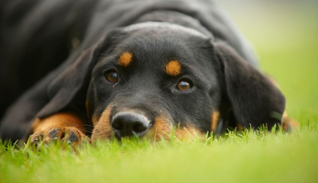 Top Dog Grooming 3