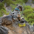 Front Range™ Dog Harness Twilight Gray 5