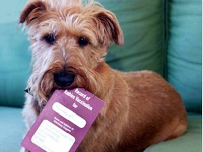 All You Need to Know about Pet Passports