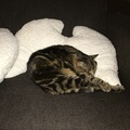 Joy Naboa Pet Pillow 4