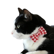 Love from Lola - Cat Collar Bow Accessory - Gingham