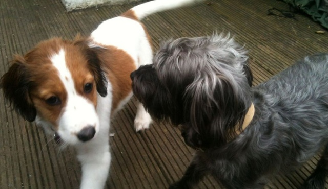 Doggies' Crib 2