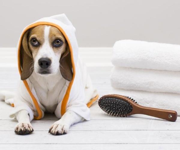 Dog-Friendly Spa Breaks