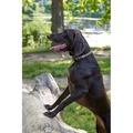 Comfort Padded Dog Collar – Green 4