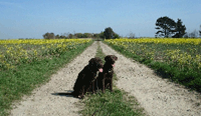 Sussex Pet Sitters
