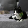 Bloom Cat Collar Flower Accessory - Lime & Aqua 3