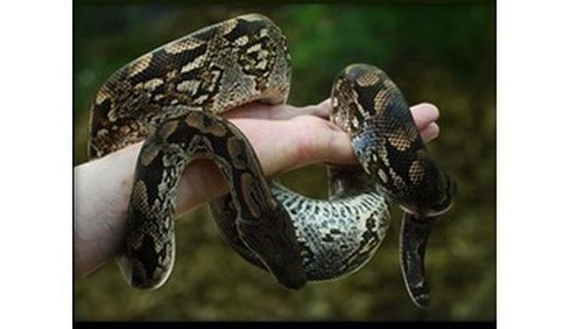 Reptile Cymru