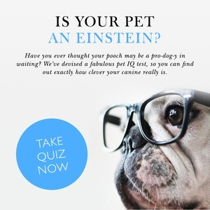 How clever is your Canine? Find out with our pet IQ quiz!