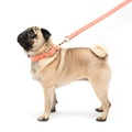 Coral Leather Dog Lead 2