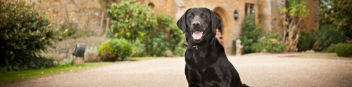 Dog-friendly Cottages