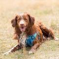 Comfort Dog Harness – Blue 4