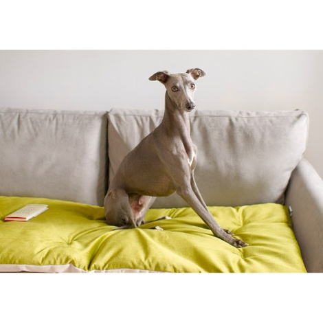 Lustre Velvet Sofa Topper - Grass 2