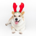 Doggy Things Furry Christmas Antlers
