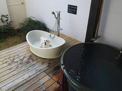 Dog-friendly Cottages with Hot Tubs