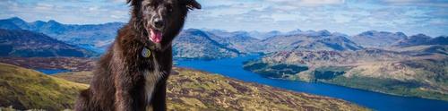 Dog-friendly Scotland