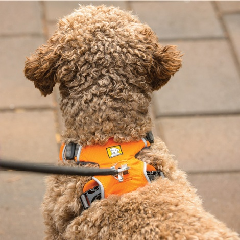 Front Range™ Dog Harness Campfire Orange 5
