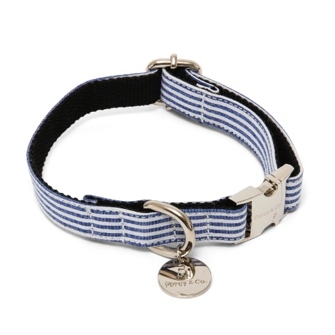 Dog Collar - Chichester 2