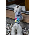Bowl&Bone Dog YOLO Hoodie Grey 4