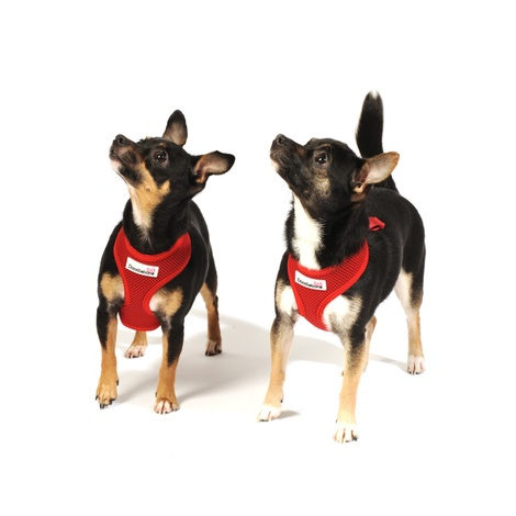 Airmesh Dog Harness – Red 3